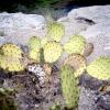 asu-context-cactus-rocks